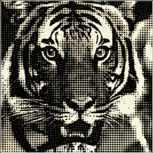 Halftone Dots Effect for After Effects